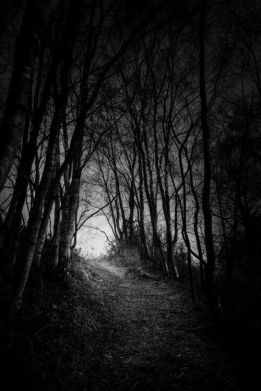 darkwoodpath