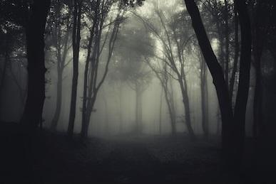 dark-foggy-forest-after-rain-260nw-131374925