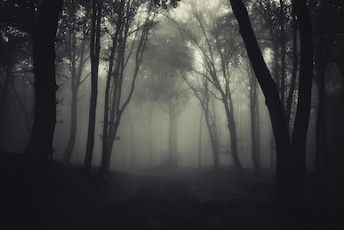 dark-foggy-forest-after-rain-260nw-131374925
