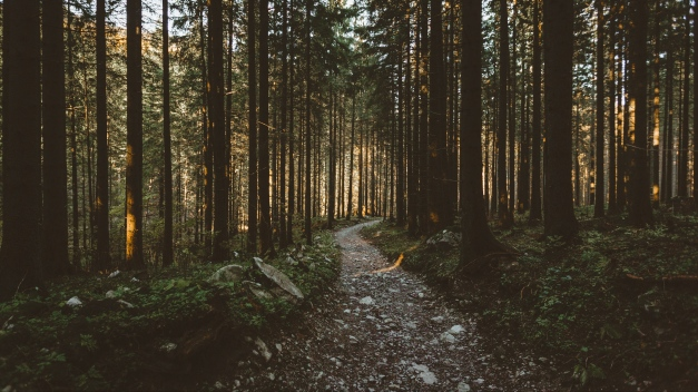 forest_pathway_trees_sunlight_120425_2560x1440
